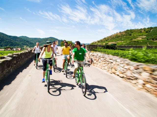 biking through vineyards on a guided tour through Wachau Valley