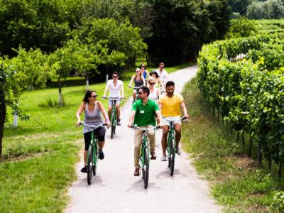 Fahrradtour entlang der Donau durch Weinberge
